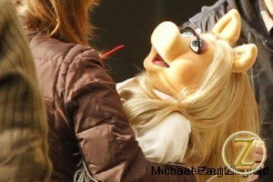 Miss Piggy being wrangled