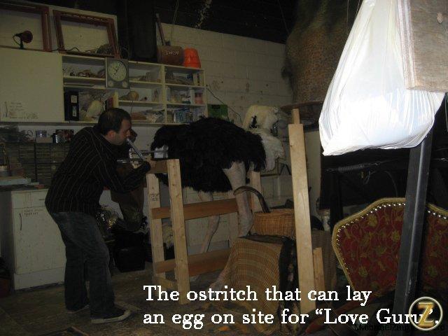 Love Guru Ostritch